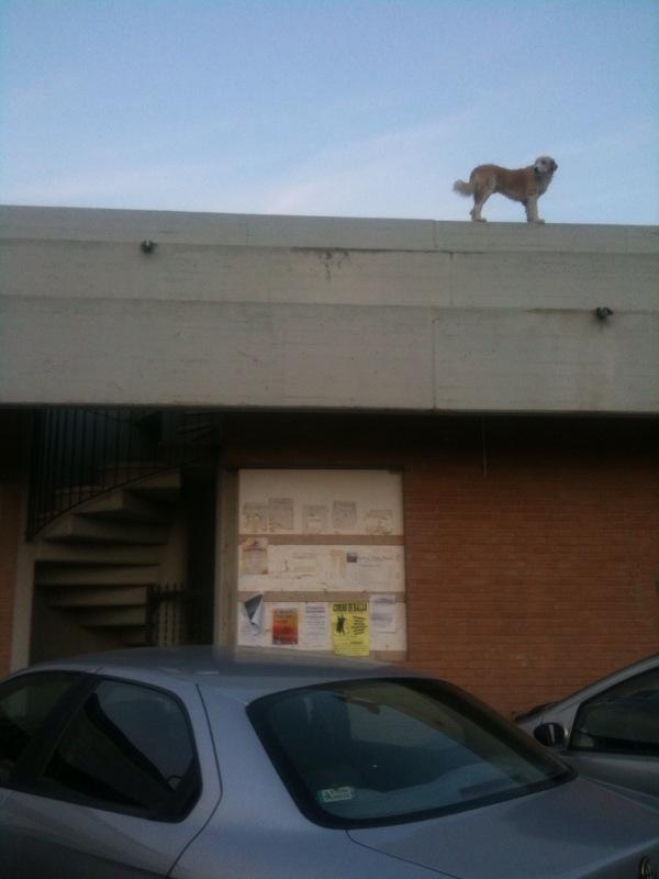 Il Cane!